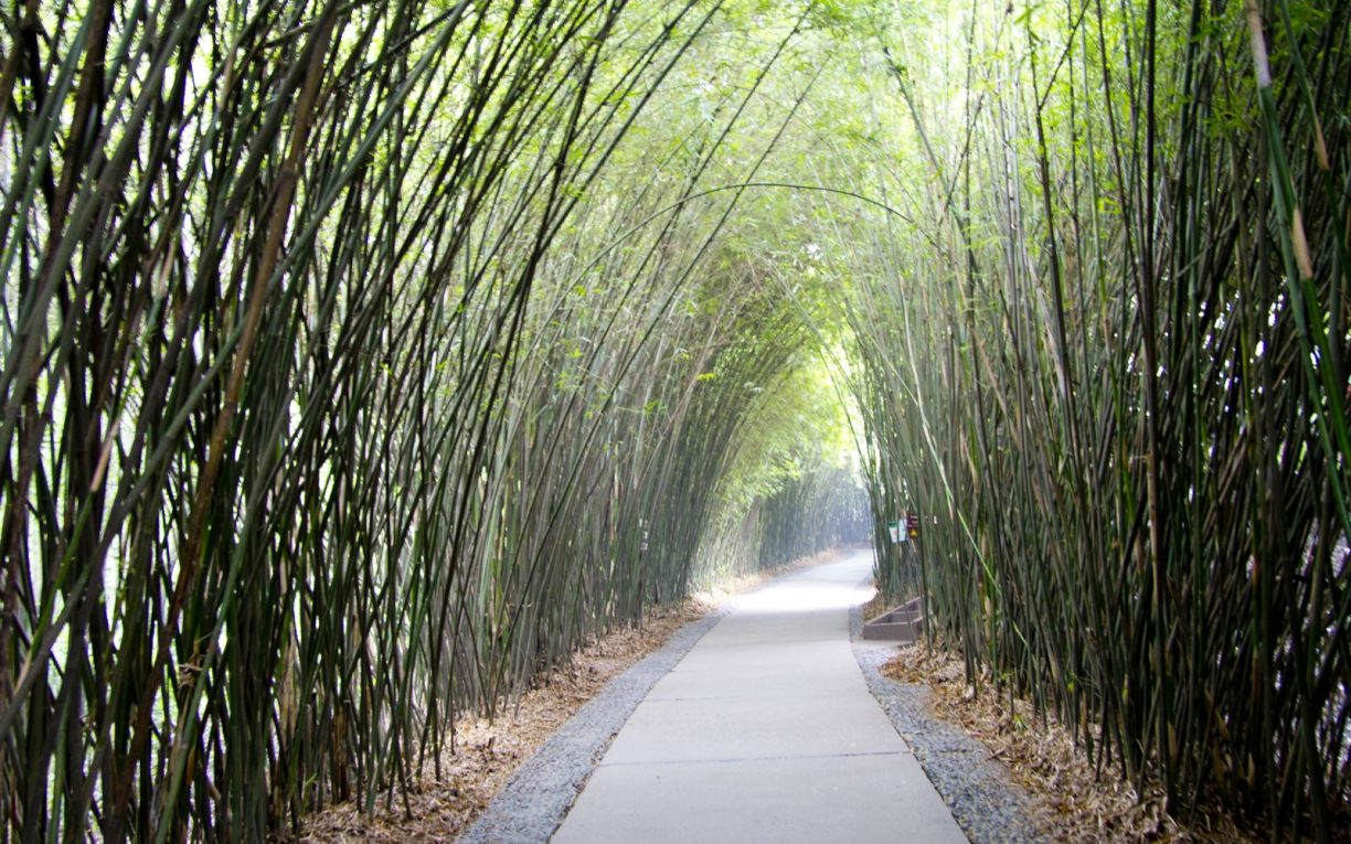 bamboo grove chengdu china