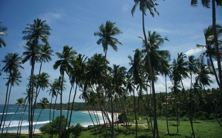 coconut palm trees beach sri lanka