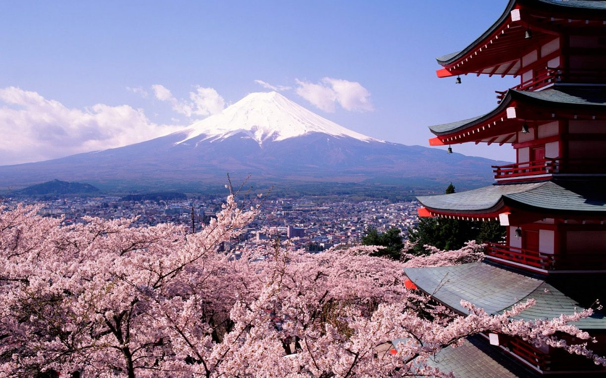 Cherry Blossom Mount Fuji Japan