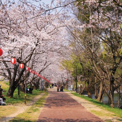 Top 3 foods you must bring to Hanami (Cherry Blossom picnic)