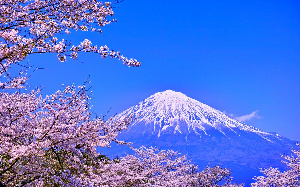 cherry blossom blue fuji japan