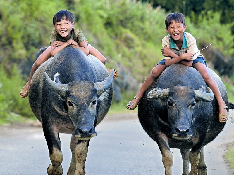 smiles children ox vietnam